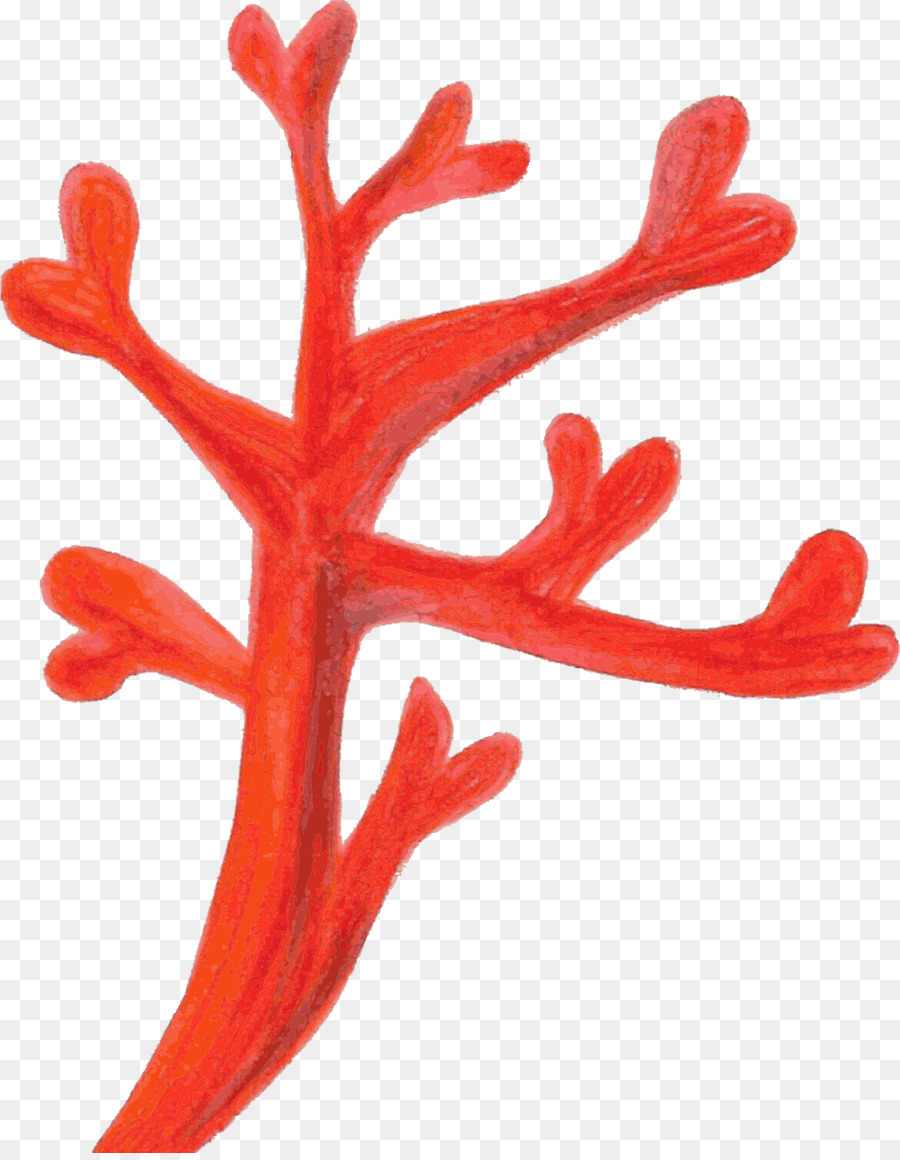 Red Coral Coral reef Clip art - coral png download - 1874*2400 ...