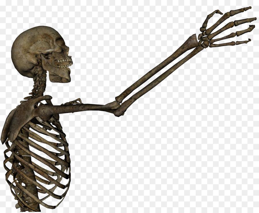 Menschliches Skelett Arm-Schädel-Anatomie-clipart - Skelett png ...
