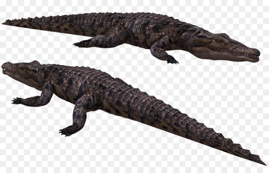 Los cocodrilos Americanos cocodrilo cocodrilo del Nilo - cocodrilo ...
