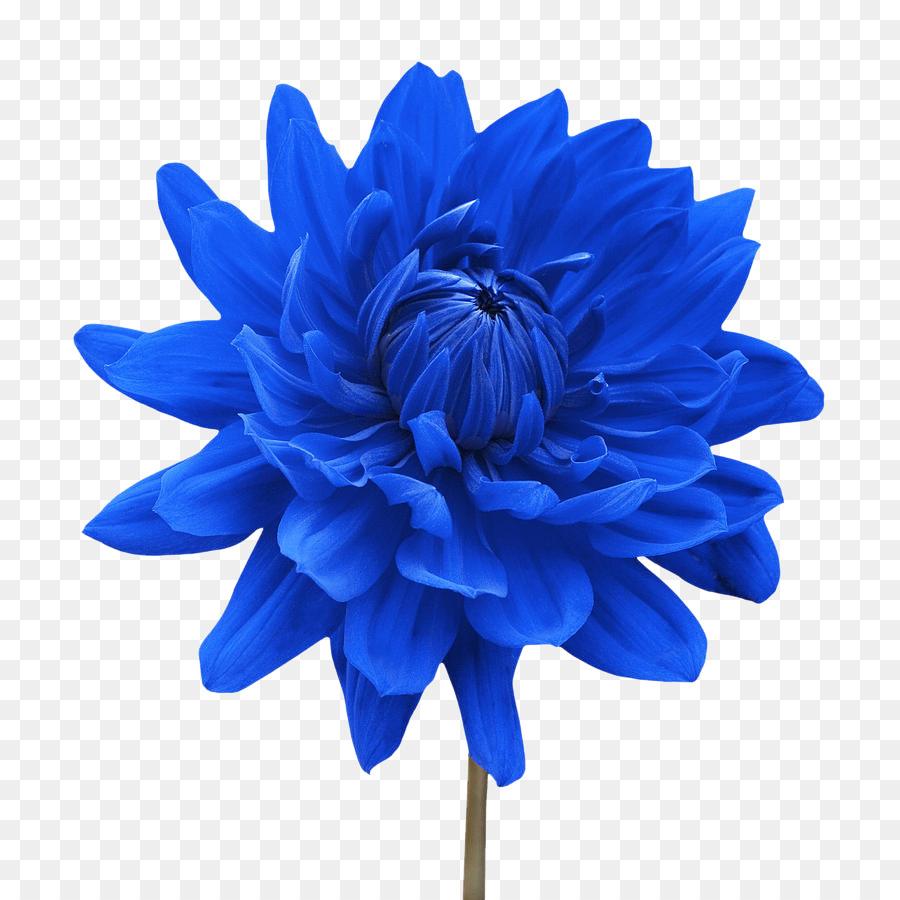 Flower White Blue Dahlia Desktop Wallpaper Flower Png Download