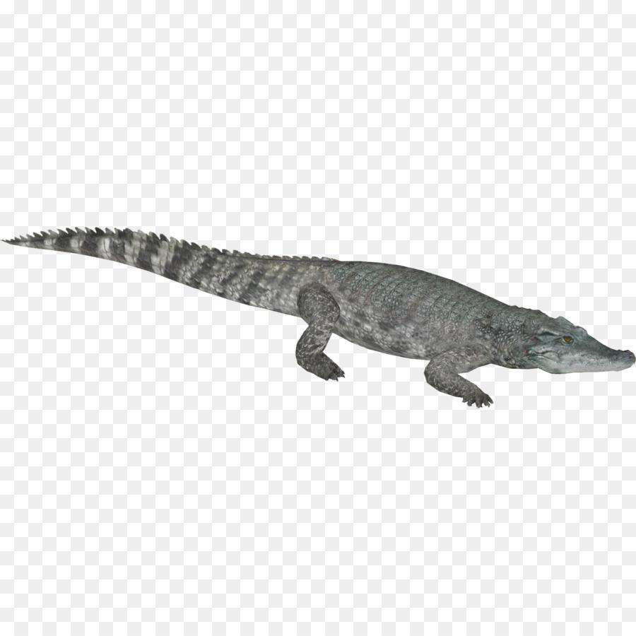 Crocodiles Gharial Nile crocodile American alligator - crocodile png ...