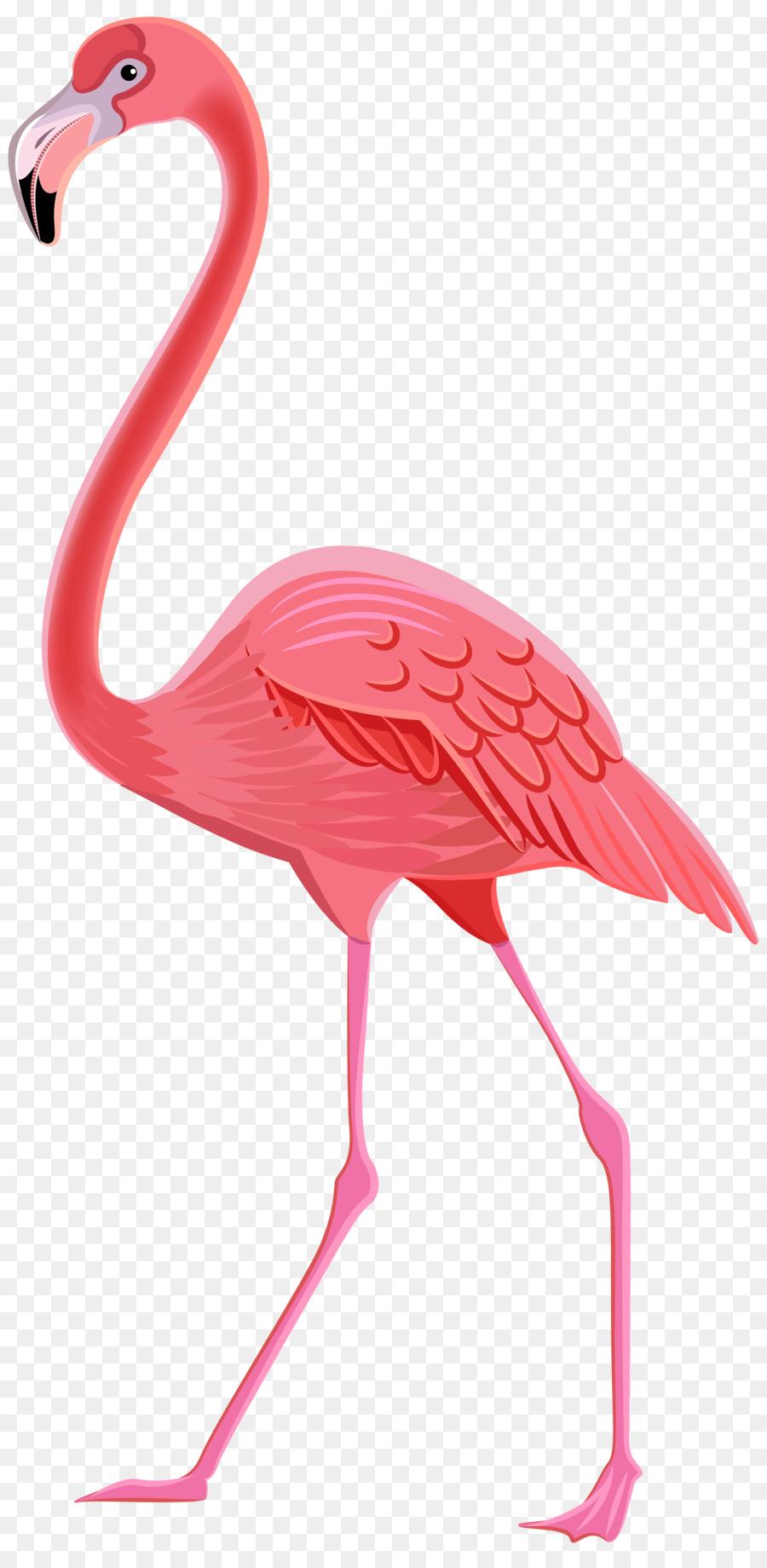 Pink Flamingo Png Download - 39358000 - Free Transparent -4575