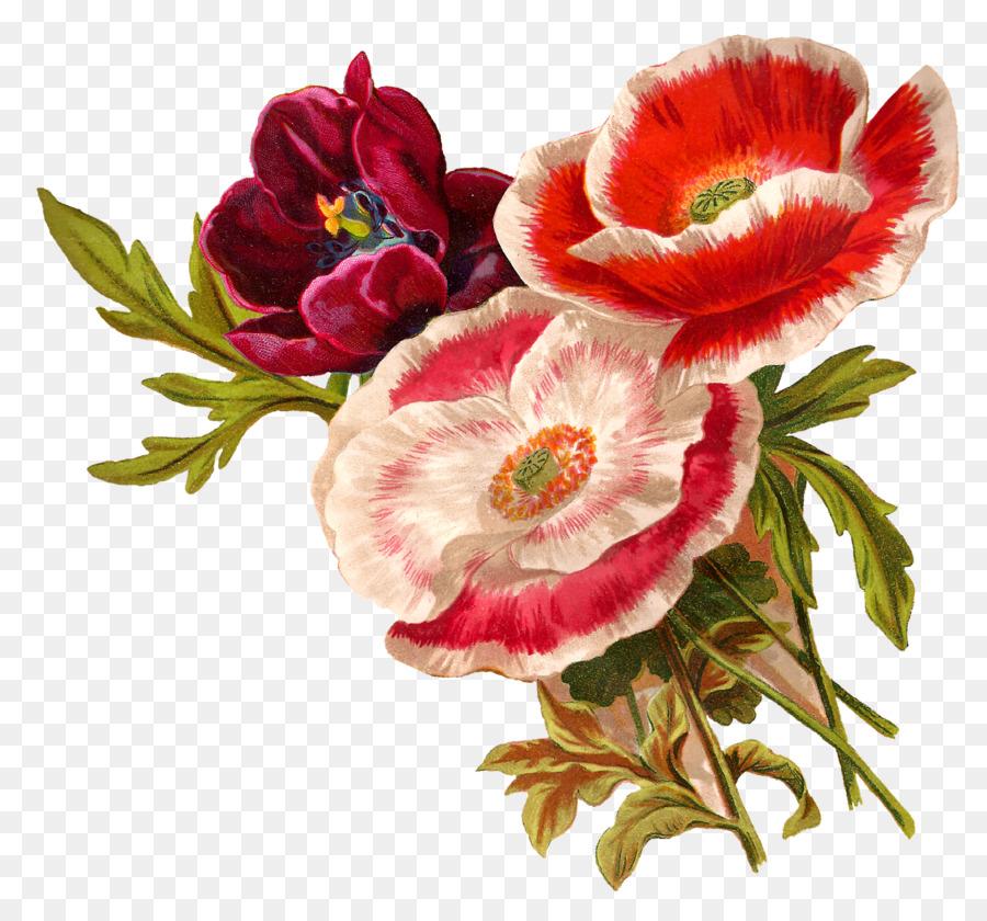 Flower floral design poppy botanical illustration clip art artwork flower floral design poppy botanical illustration clip art artwork mightylinksfo