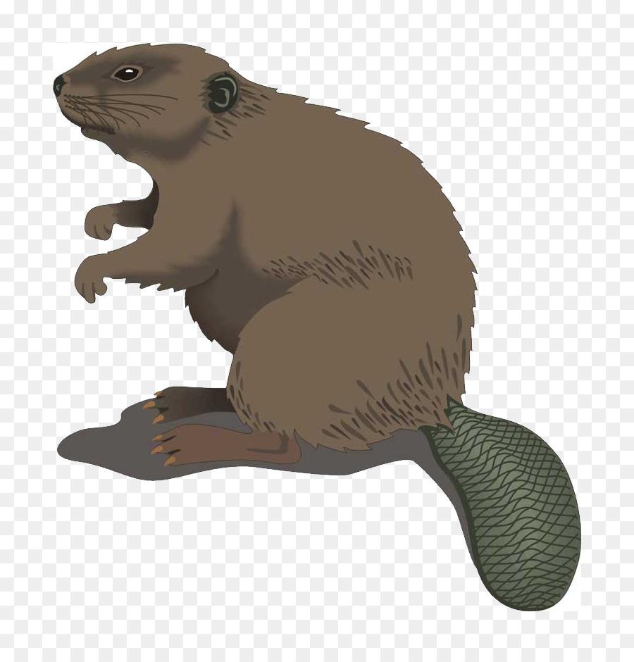beaver cartoon clip art beaver png download 861 928 free rh kisspng com beaver clip art black and white beaver clip art pictures free