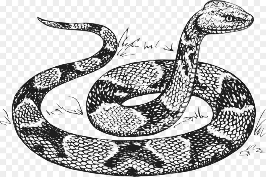 Serpiente Pitón de Dibujo Clip art - anaconda Formatos De Archivo De ...