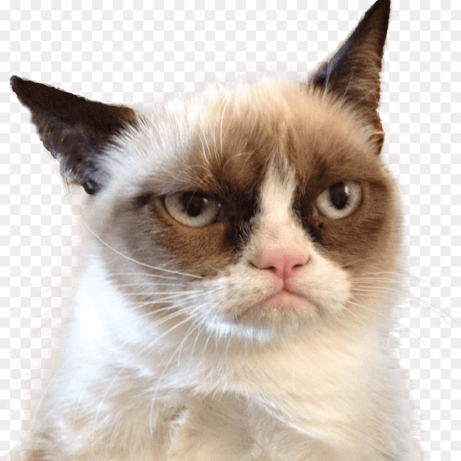 Kisspng grumpy cat pet sitting felidae cats 5aba0a040dd122.3408962815221417000566