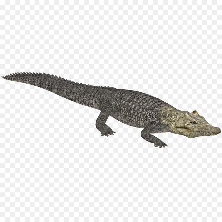 Zoo Tycoon 2 Crocodiles Nile crocodile Alligator - crocodile png ...