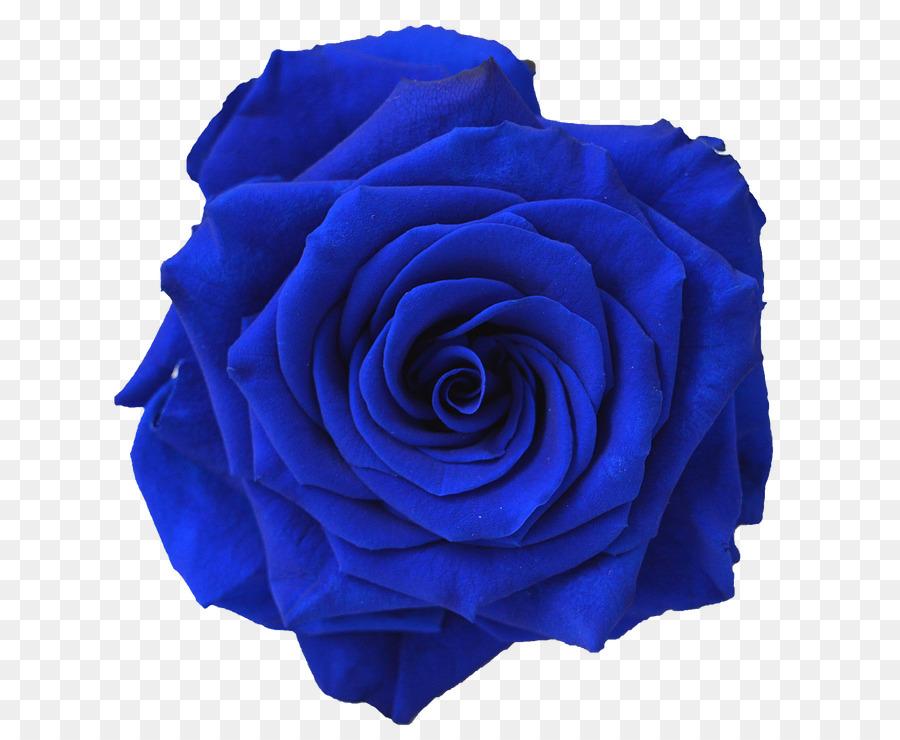 Blue Rose Flower Navy Blue Clip Art