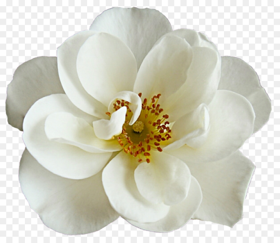Flower bouquet White Rose - peonies png download - 964*828 - Free ...