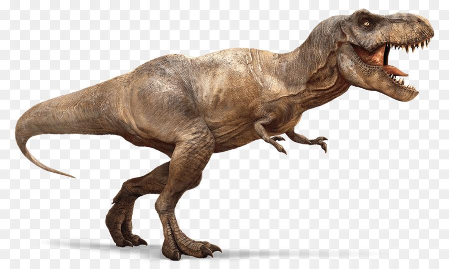 Velociraptor Tyrannosaurus Rex Spinosaurus Dinosaur Theropods