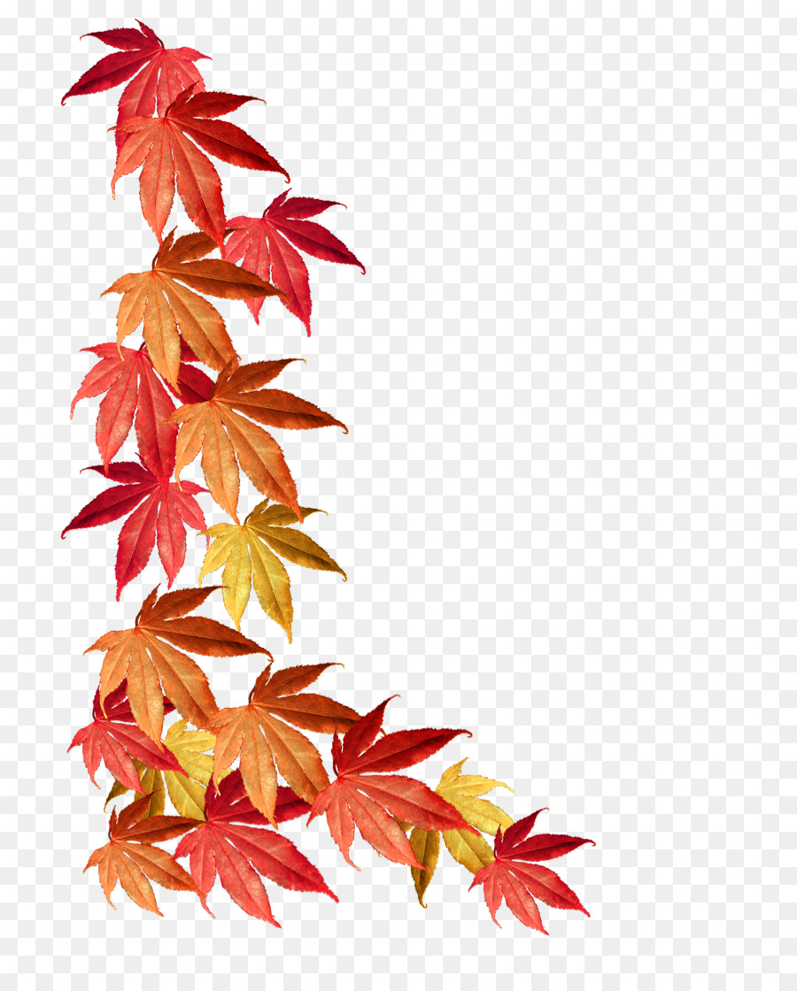 Borders and Frames Maple leaf Autumn leaf color - autumn leaves png ...
