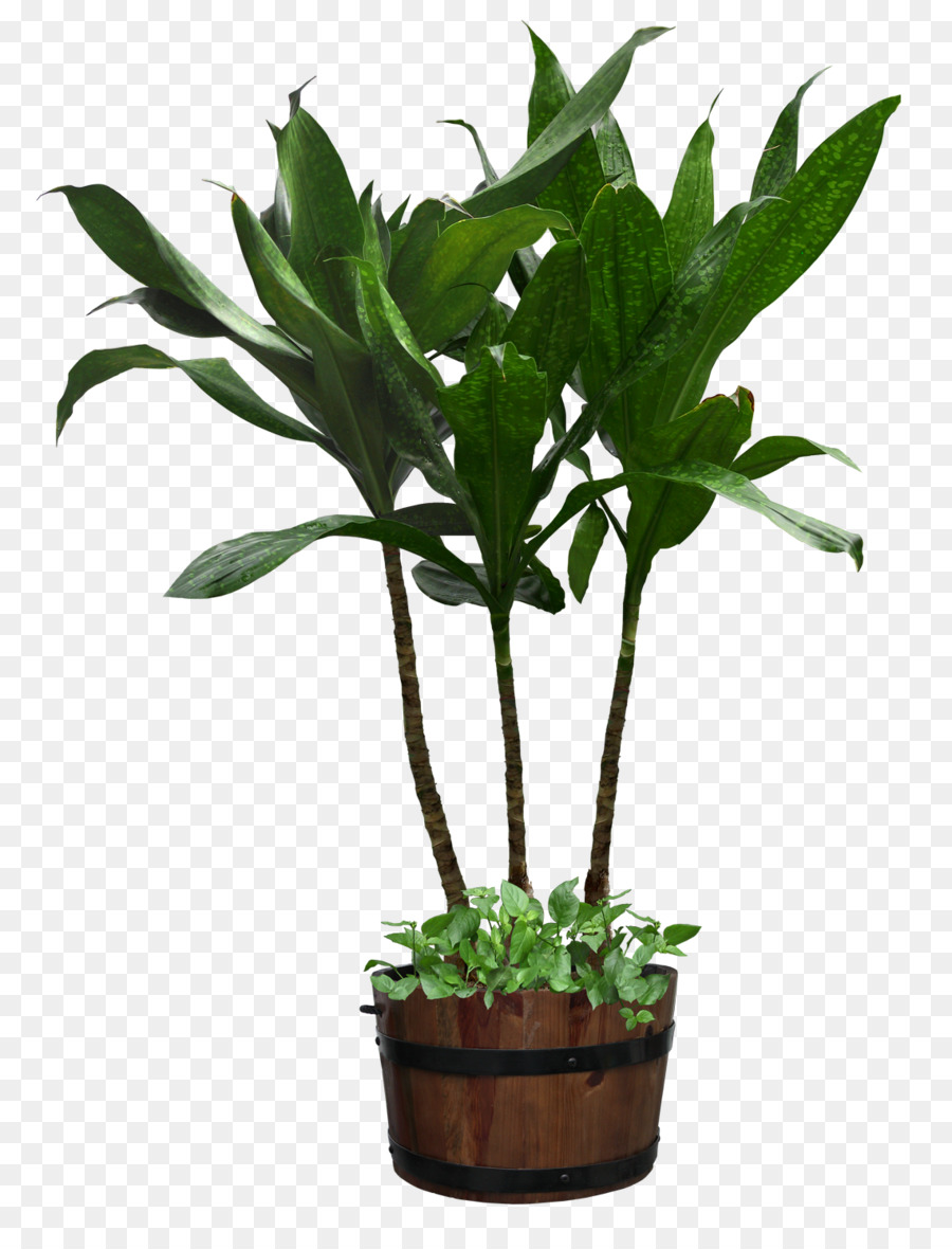 Houseplant Flowerpot - potted plant png download - 1140*1480 - Free ... for potted plant transparent  53kxo