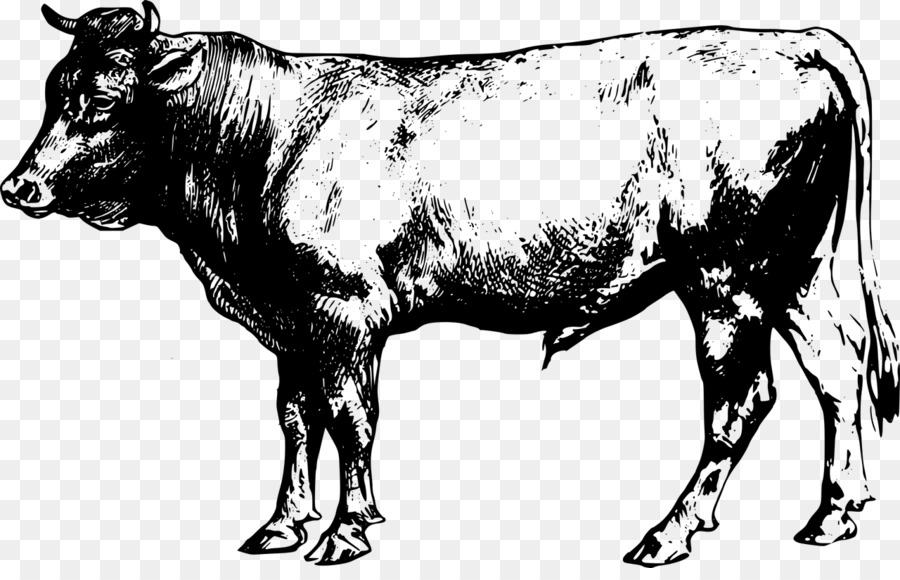 Angus Cattle Beef Cattle Clip Art
