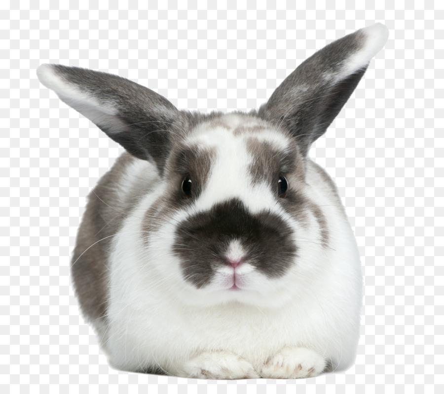 Hare Doméstica conejo conejo Europeo de punto de Cruz Patrones ...