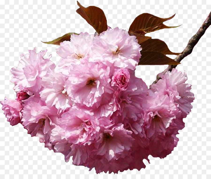 Flower bouquet Cherry blossom Clip art - cherry blossom png download ...