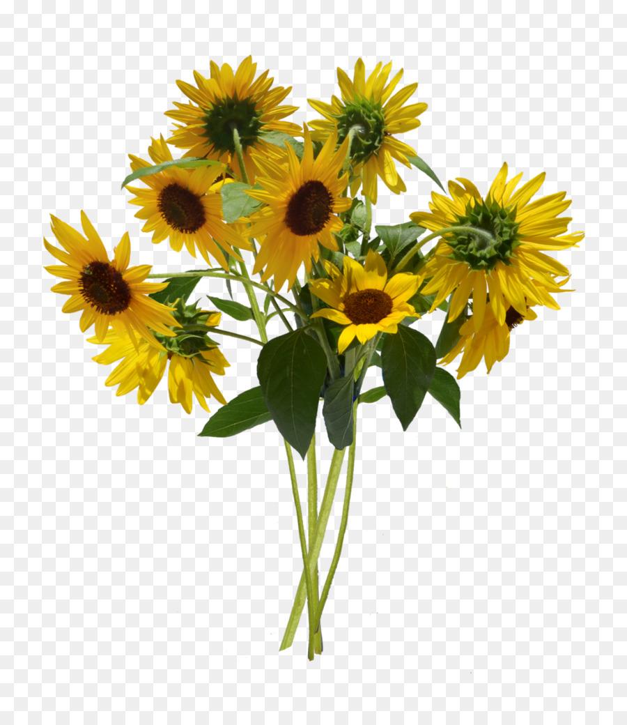 commune de tournesol informations bouquet de fleurs - aquarelle