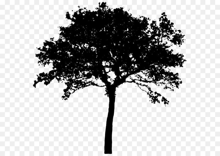 tree silhouette clip art tree vector png download 2400 1703 rh kisspng com oak tree silhouette clip art oak tree silhouette clip art