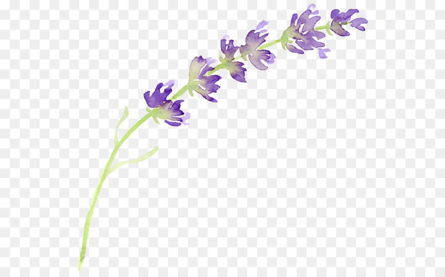 english lavender flower watercolor painting clip art smoke clip art free smoke clip art black white