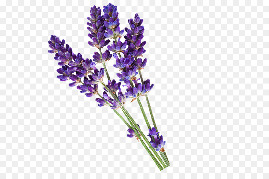 english lavender essential oil piperwai cosmetics