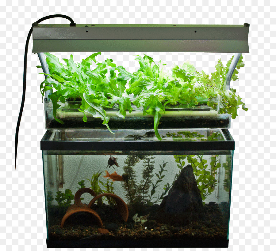 Aquaponics Hydroponics Fish Aquarium Garden   Aquarium
