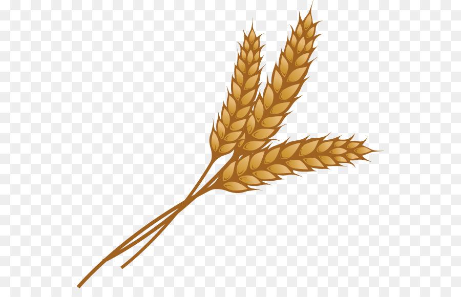 wheat ear grain clip art wheat png download 600 563 free rh kisspng com grain clipart free grain clipart free