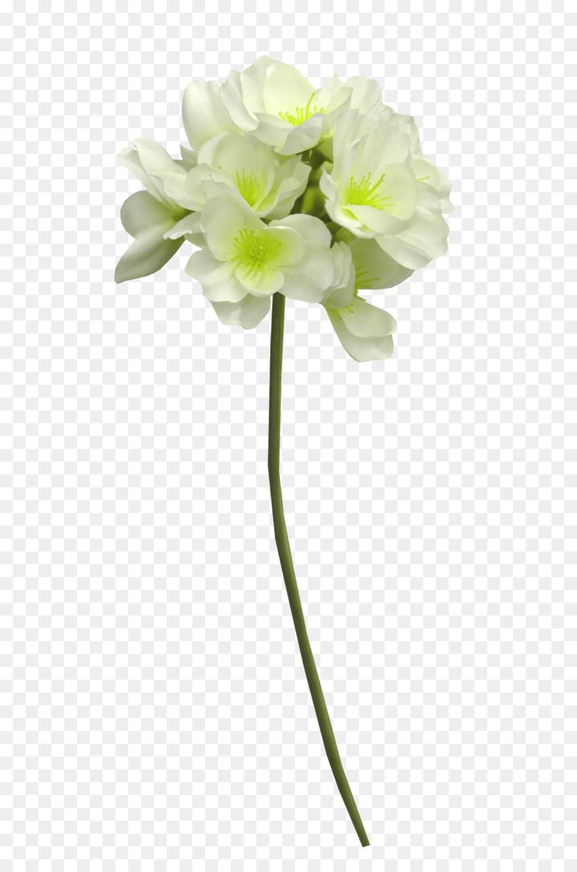 Cut flowers white cape jasmine white flowers png download 1500 cut flowers white cape jasmine white flowers izmirmasajfo