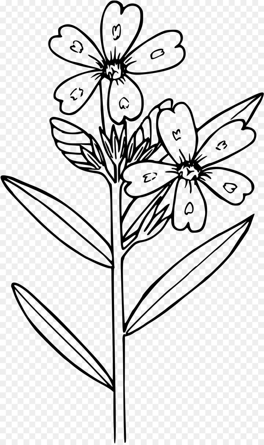 Phlox Drummondii çiçek Boyama Kitabı Küçük Resim Anemon Png Indir