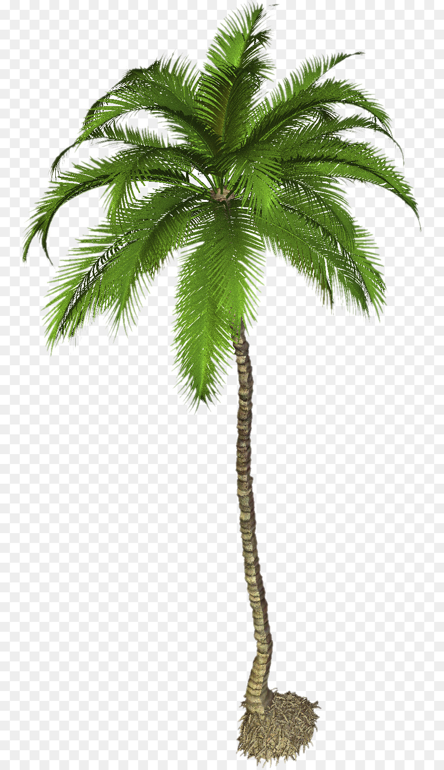 Coconut Tree Cartoon png download - 811*1557 - Free