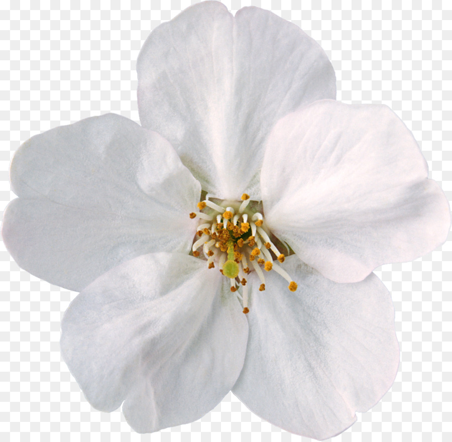 Flower White Clip Art White Flowers Png Download 11131086