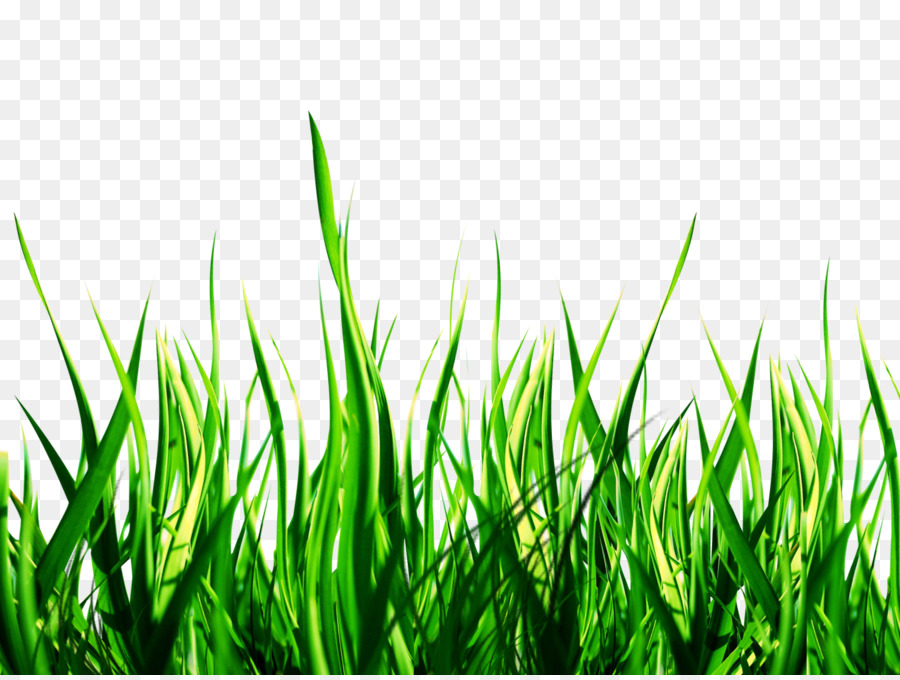 Green Grass Background png download - 1600*1200 - Free Transparent