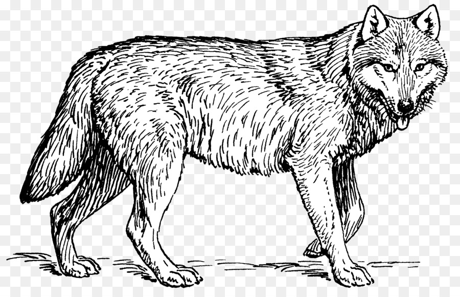 Puppy Arctic wolf Coloring book Pack Clip art - wolf png download ...