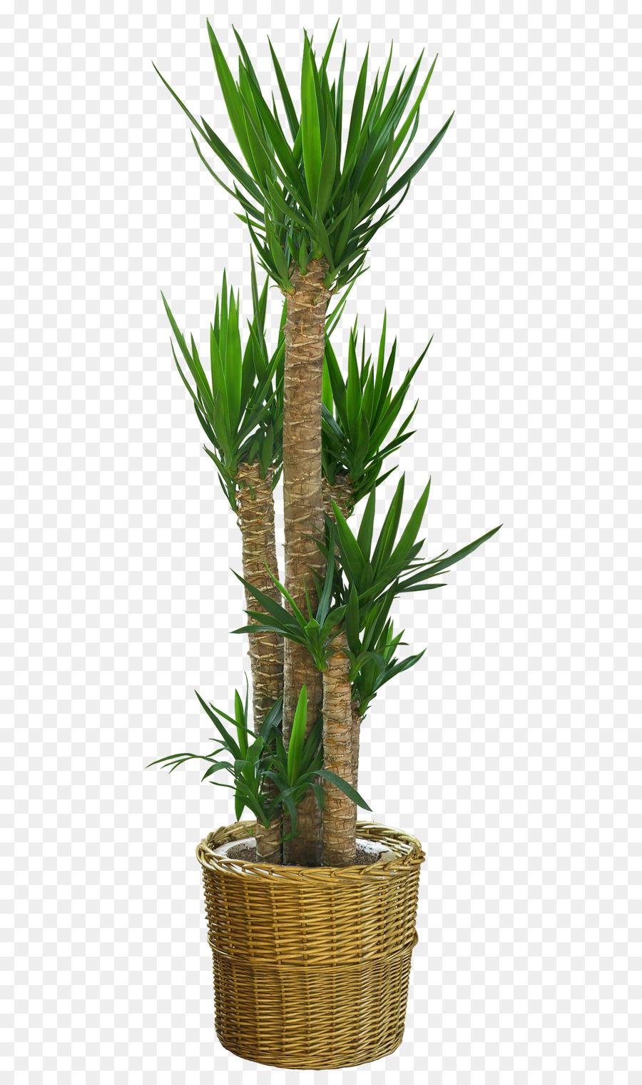 https://banner2.kisspng.com/20180328/oye/kisspng-dracaena-draco-flowerpot-plant-potted-plant-5abc15e1d3d6b5.1581600315222758098677.jpg Dracaena