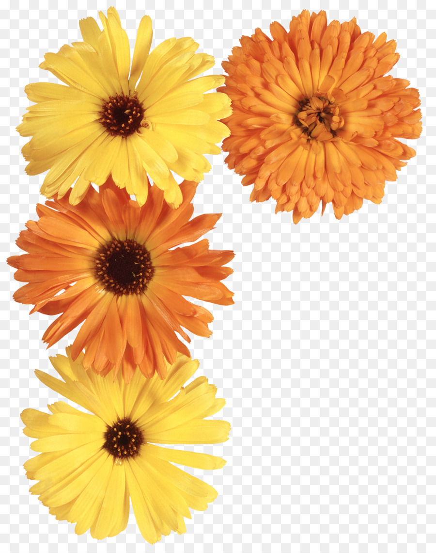 Flower pot marigold daisy family yellow flowers png download flower pot marigold daisy family yellow flowers izmirmasajfo