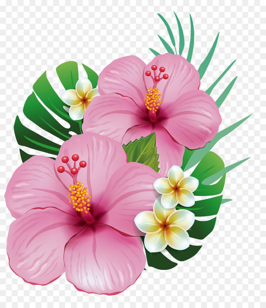 Hawaii Shoeblackplant Common Hibiscus Flower Clip Art Tropical Png
