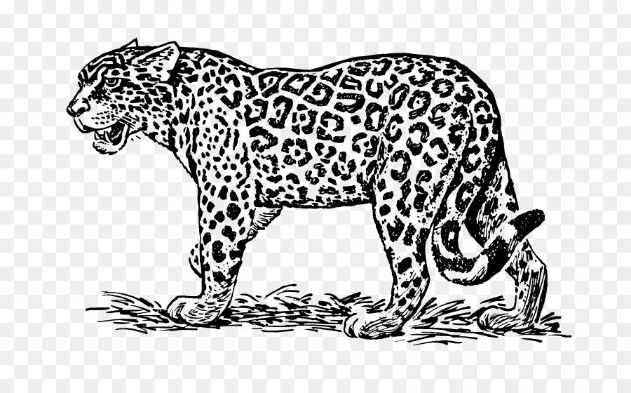 Jaguar Línea de Dibujo en el arte Royalty-free Clip art - jaguar ...