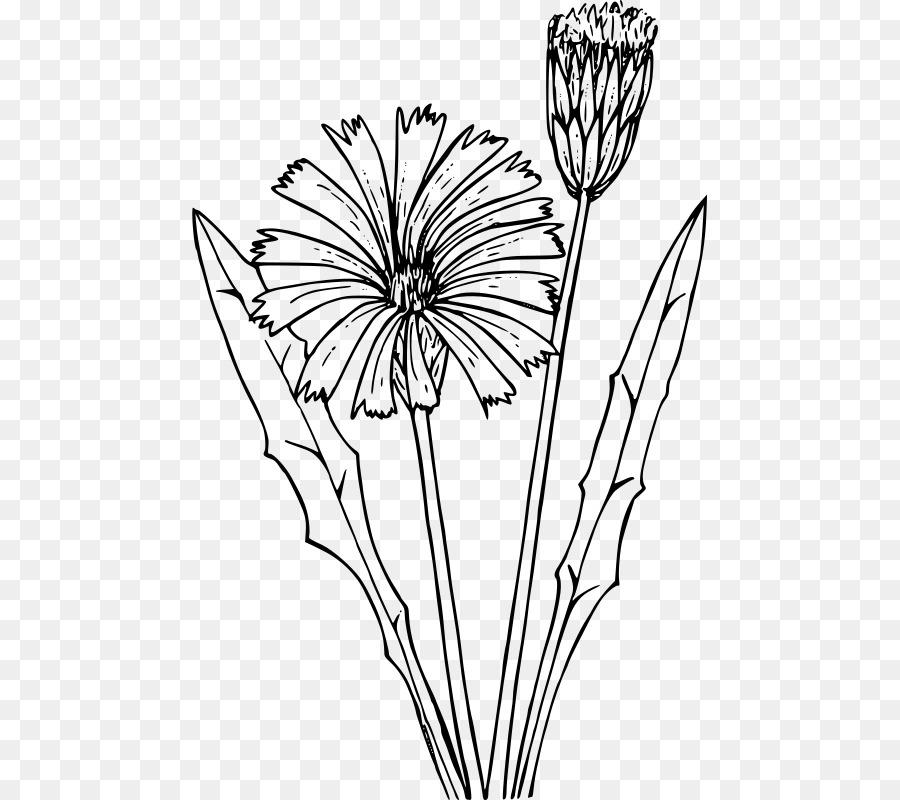 Common Dandelion Coloring book Flower Drawing Flatweed - dandelion ...