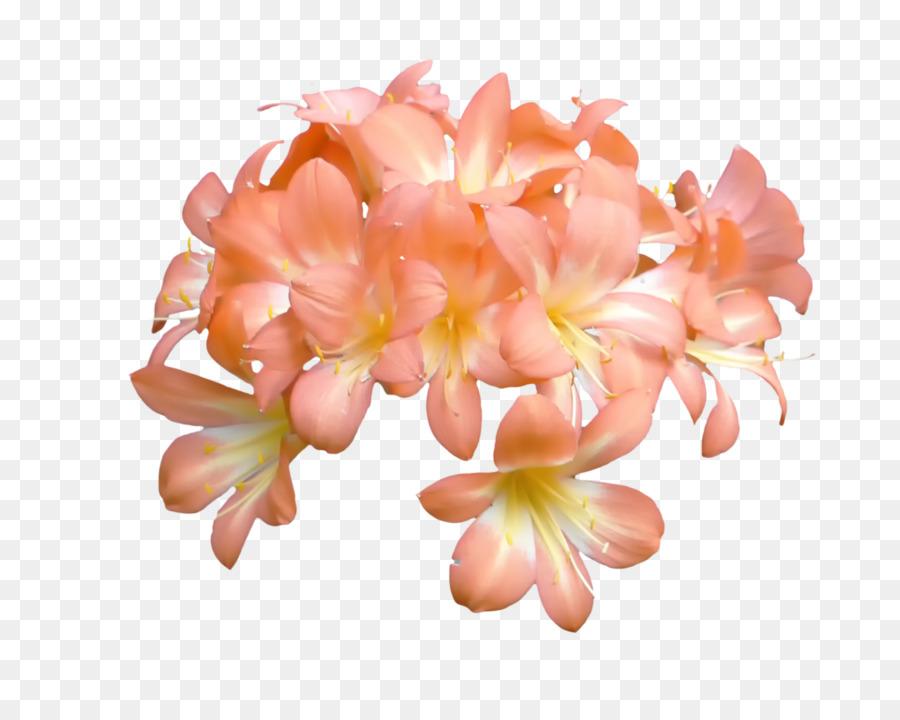 Peach flower blossom orange petal peach flower png download 1024 peach flower blossom orange petal peach flower mightylinksfo