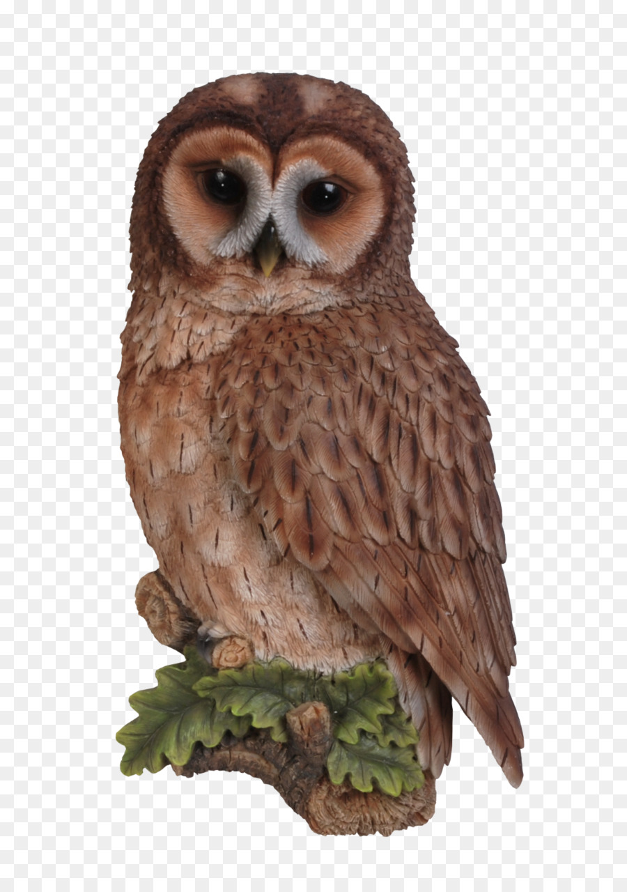 Tawny owl Bird Long-eared Owl Wall - owl png download - 1080*1523 ...
