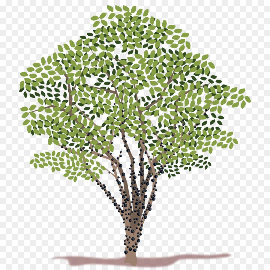arbre de clip art l 39 arbre d 39 argent t l chargement png 2400 2400 transparent gratuit plante. Black Bedroom Furniture Sets. Home Design Ideas