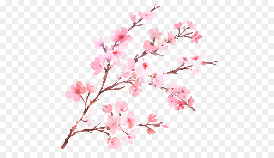 Cherry blossom flower branch watercolor painting cherry blossom cherry blossom flower branch watercolor painting cherry blossom mightylinksfo