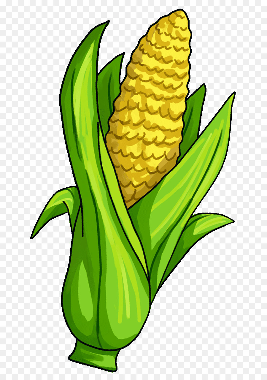 corn on the cob candy corn maize vegetable clip art corn png rh kisspng com grilled corn on the cob clipart corn on the cob clipart