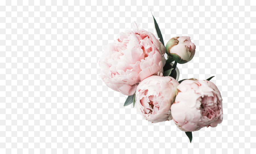 Desktop Wallpaper Peony High Definition Television