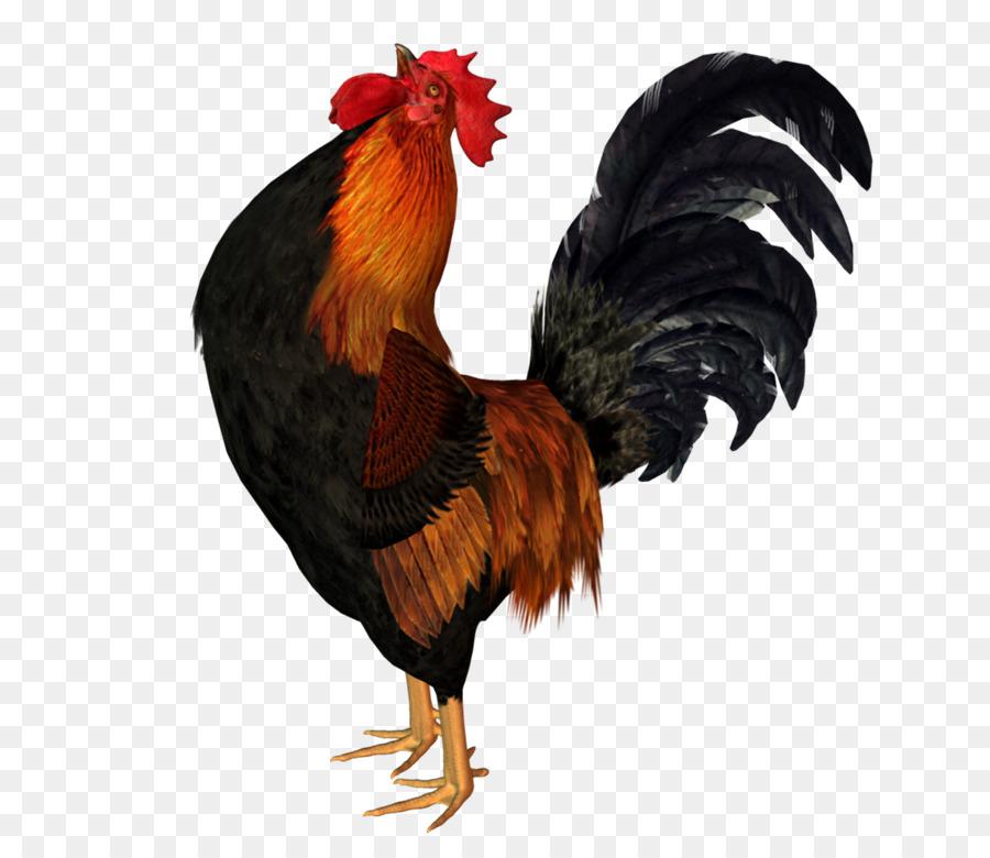 pollo gallo animaci243n de aves gallo png dibujo