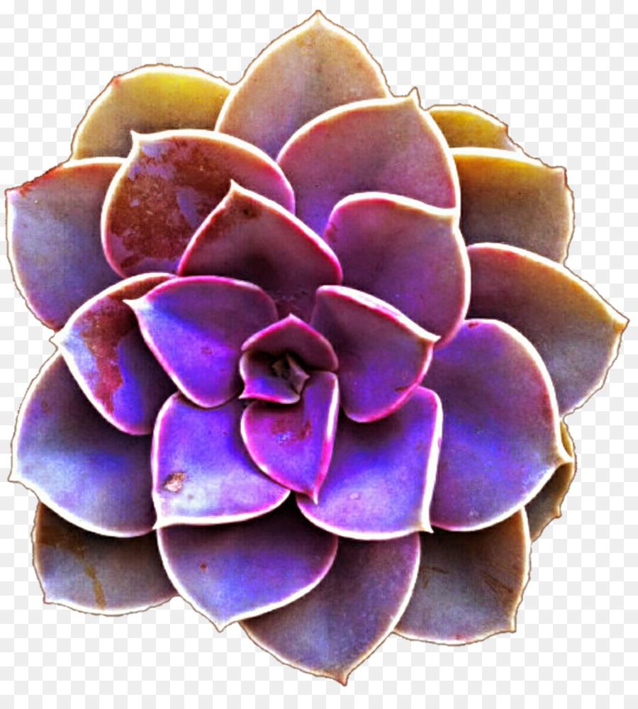 Succulent plant Purple Color Clip art - succulent png download - 1024*1124 - Free ...