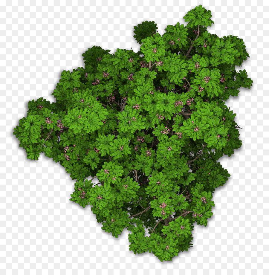 Lacinato kale Sweet chestnut Leaf vegetable Plant - tree ...