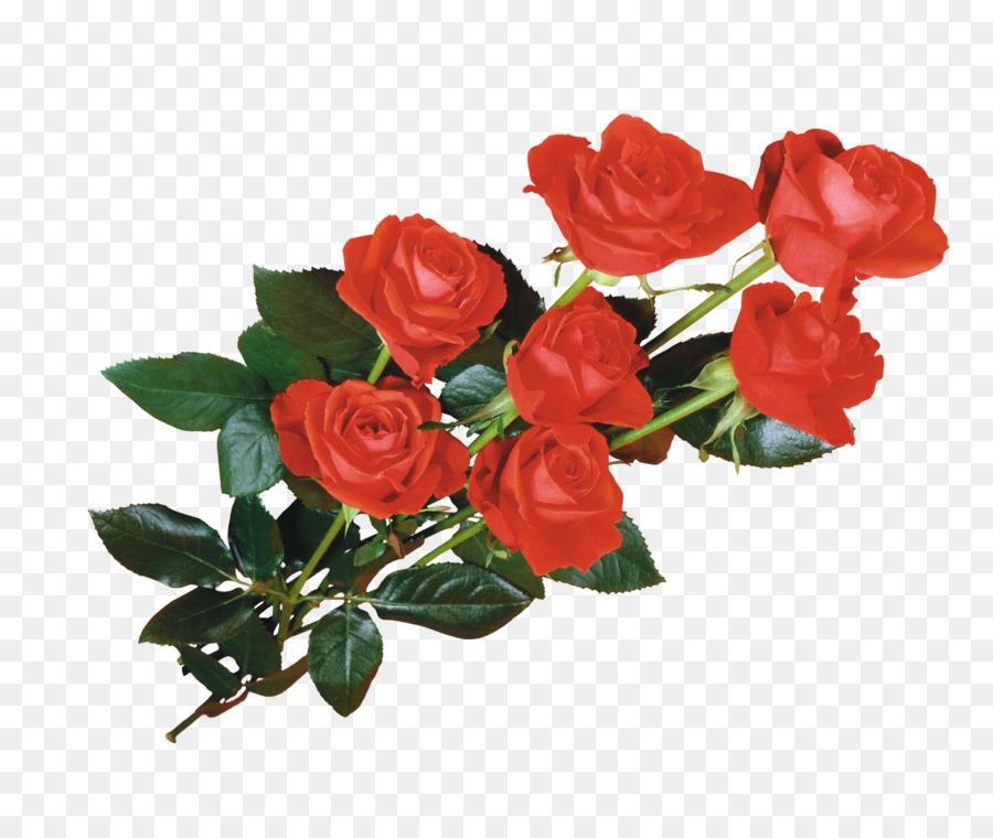 Flor De Papel Tapiz De Desktop De Giphy Rosas Rojas Png Dibujo