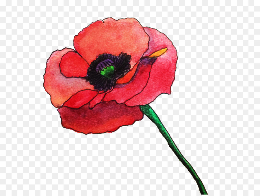Common poppy flower watercolor painting remembrance poppy rose common poppy flower watercolor painting remembrance poppy rose watercolor mightylinksfo