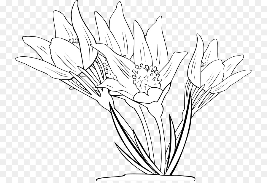 Flor libro para Colorear, imágenes prediseñadas - anemone Formatos ...