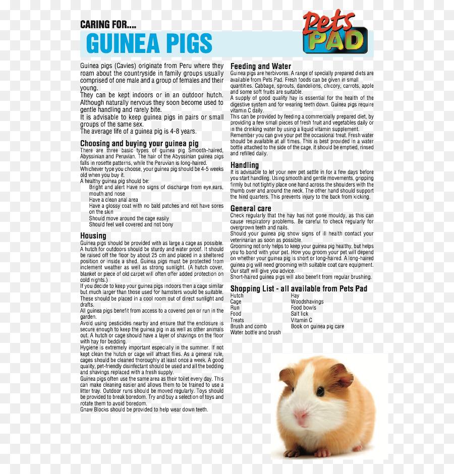 Conejillo De Indias Del Cuidado De Roedores Mascota - conejillo de ...