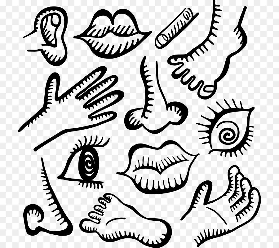Anatomía humana Doodle cuerpo Humano - garabatos Formatos De Archivo ...